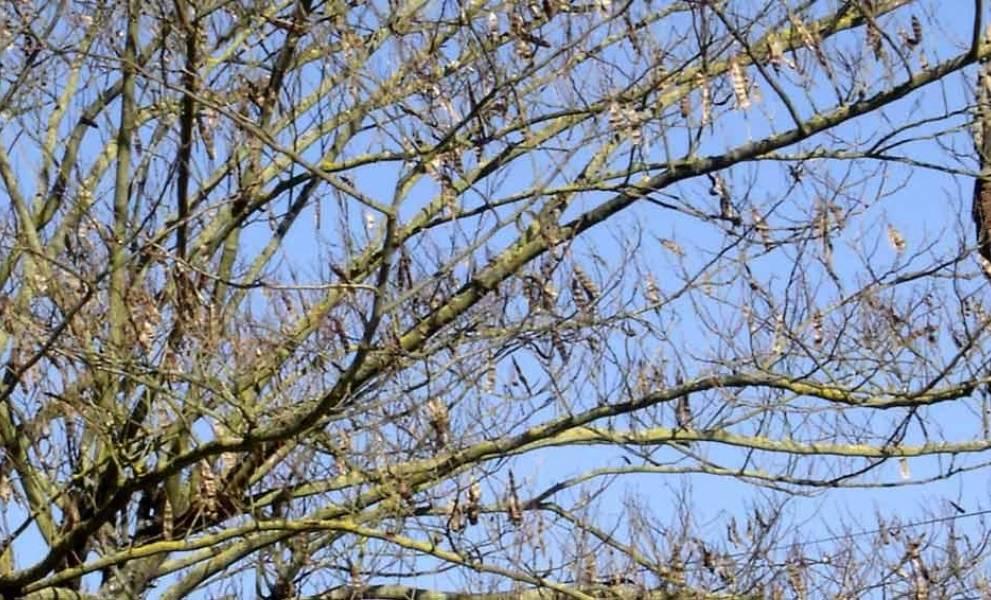 photo de EHPAD Les Magnolias Le Houga